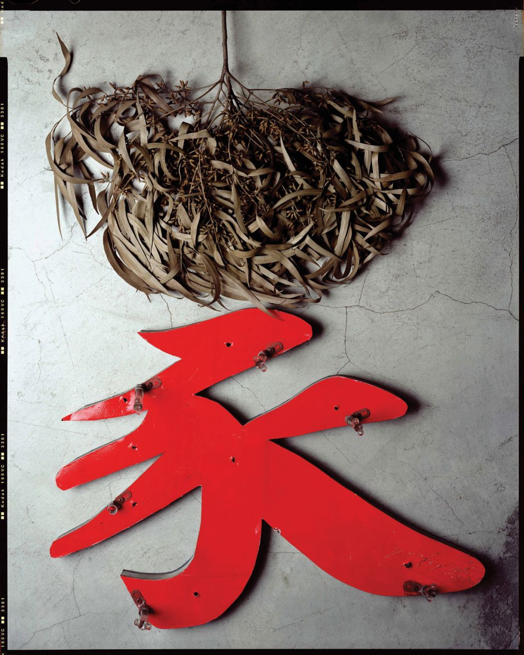 branch with leaves / collected 2002 <p>restaurant shop sign / collected 2006