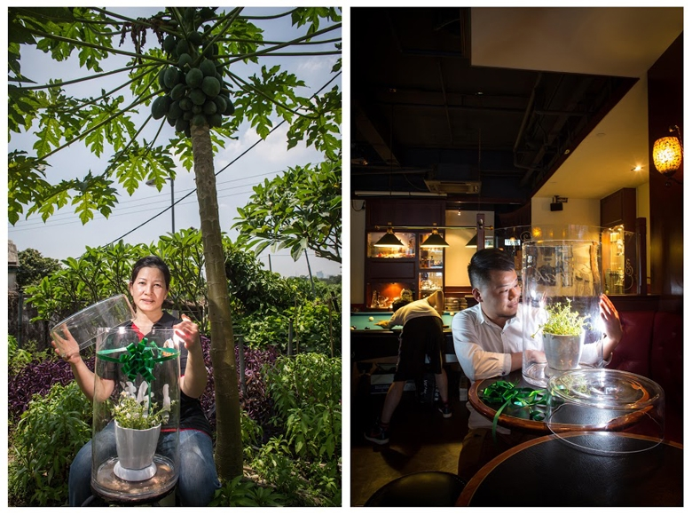 "North East New Territories Suburbanite: Auntie Lan (Housewife, Gardening Enthusiast) <P>Venue: Ping Che, North East New Territories </P><P>Plant: Sunflower </P><P>Urbanite: Andrew </P><P>Venue: Prince Bar  </P><P>After opening the glass bottle, the first thing Andrew said, ""What a fresh smell of trees!"" I replied, ""I collected this under a tree."" He said, ""I often come to this bar. I find it meaningful to open the bottle here. I can share this air with more urbanites."" The next day, he told me that his plants blossomed. Of course sunflowers would blossom under the sun. Auntie Lan chose this plant as it is easy to take care of. She puts a lot of effort into her little garden. It saddens her that the government wants her to leave this place where she has lived for many years.</P>"